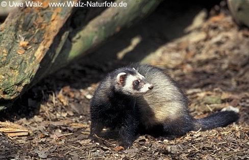j gervereinigung schwarzwald baar kreis archiv naturkalender
